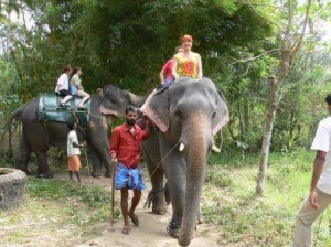 Elephant safari tour kerala