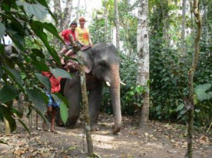 Kerala Elephant ride : Aqua Jumbo Tours